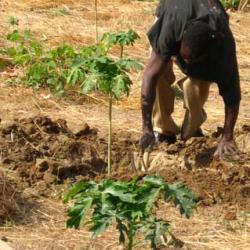 et planter des arbres